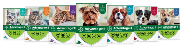 Advantage®II cat and dog