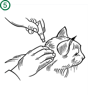 How to apply Advantage®II step 5: entire tube applied onto cat's neck