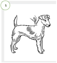 How to apply Advantage®II step 5: Apply the entire content of the tube evenly to specified spots along your dog's back between the shoulder blades.