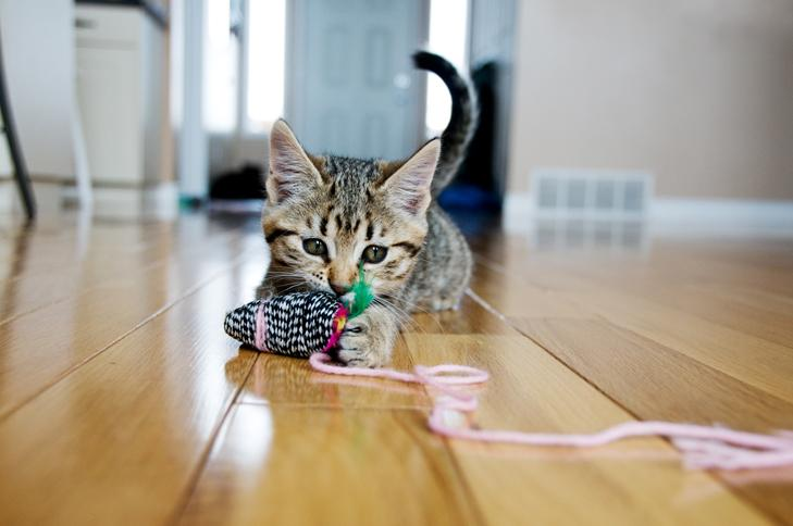 Cute kitten plays with a ball of wool