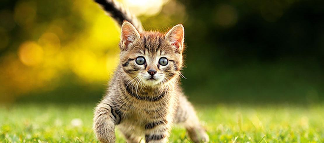 A young kitten walking in the grass