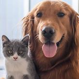 Advocate flea, heartworm and intestinal worm treatment for dogs and cats_thumbnail