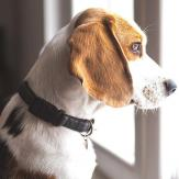A dog looking out of the window