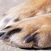 Close-up of a dog's nails