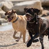 Dogs running at the beach