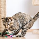 cat exercising and playing with cat toys
